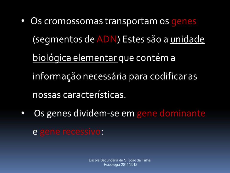 Os cromossomas transportam os genes (segmentos de ADN) Estes são a unidade biológica elementar que contém a informação necessária para codificar as no