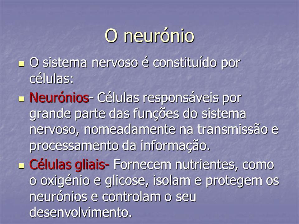 O neurónio O sistema nervoso é constituído por células: O sistema nervoso é constituído por células: Neurónios- Células responsáveis por grande parte
