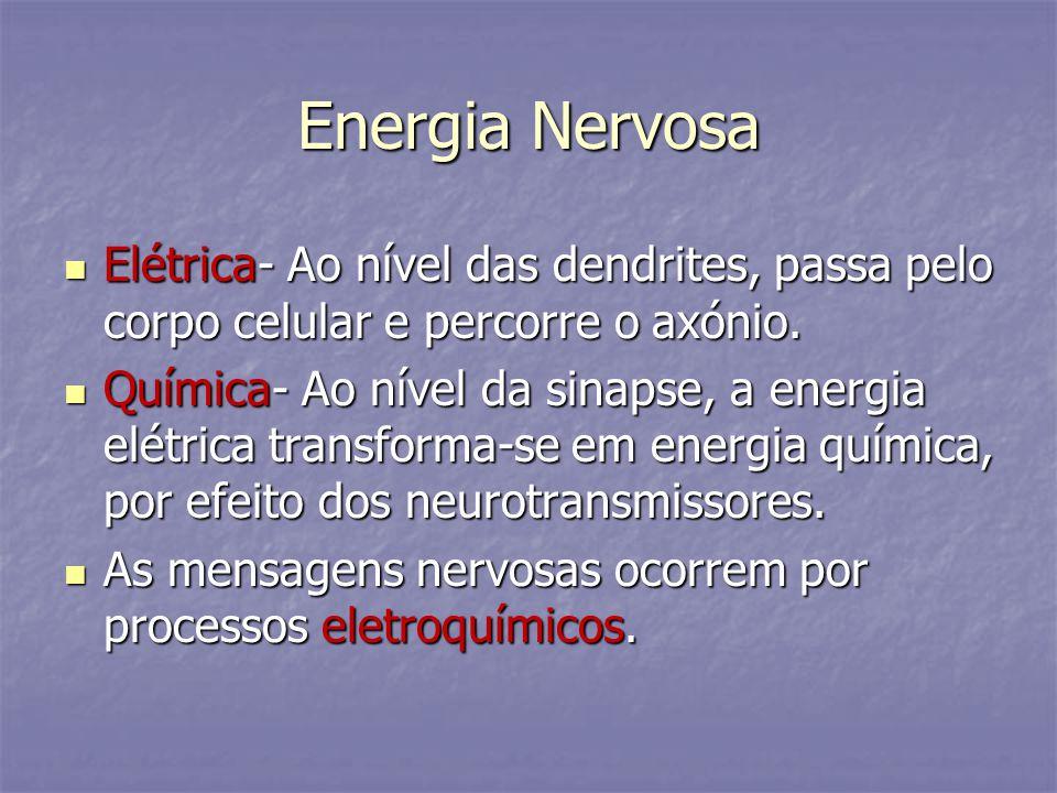 Energia Nervosa Elétrica- Ao nível das dendrites, passa pelo corpo celular e percorre o axónio. Elétrica- Ao nível das dendrites, passa pelo corpo cel