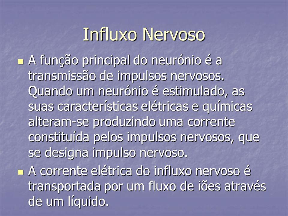 Influxo Nervoso A função principal do neurónio é a transmissão de impulsos nervosos. Quando um neurónio é estimulado, as suas características elétrica