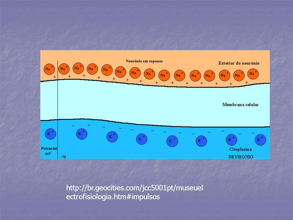 http://br.geocities.com/jcc5001pt/museuel ectrofisiologia.htm#impulsos