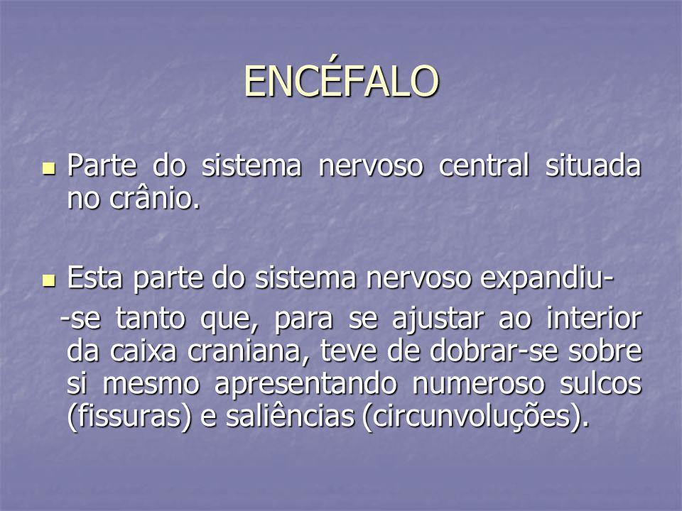 ENCÉFALO Parte do sistema nervoso central situada no crânio. Parte do sistema nervoso central situada no crânio. Esta parte do sistema nervoso expandi
