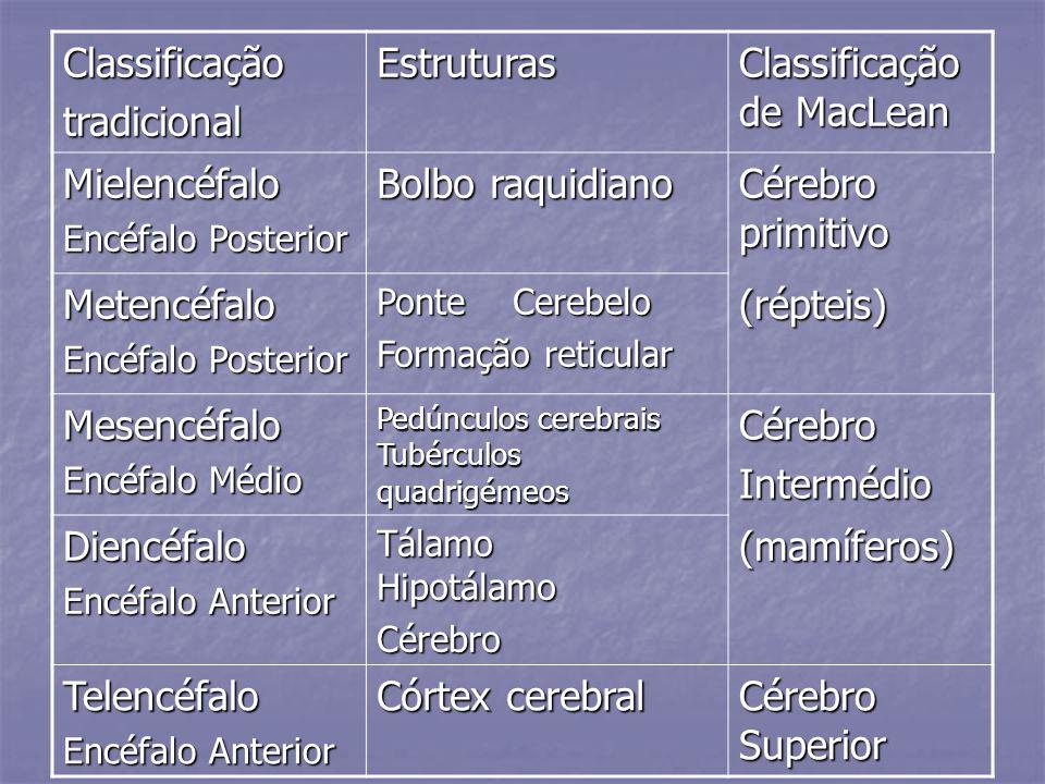 ClassificaçãotradicionalEstruturas Classificação de MacLean Mielencéfalo Encéfalo Posterior Bolbo raquidiano Cérebro primitivo Metencéfalo Encéfalo Po
