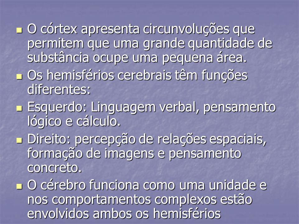 O córtex apresenta circunvoluções que permitem que uma grande quantidade de substância ocupe uma pequena área. O córtex apresenta circunvoluções que p