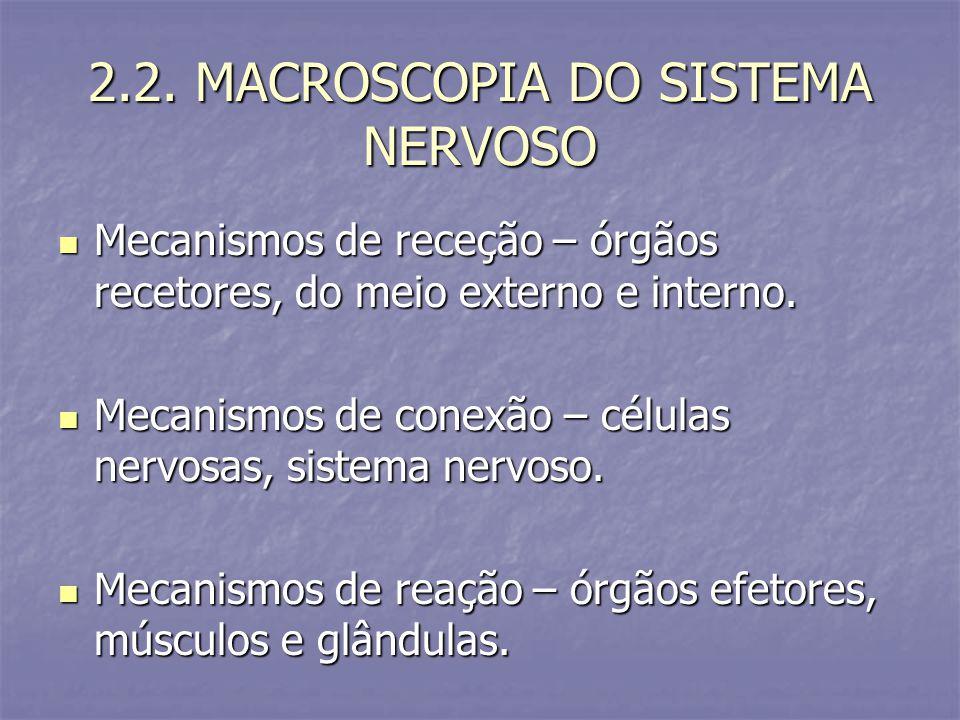 2.2. MACROSCOPIA DO SISTEMA NERVOSO Mecanismos de receção – órgãos recetores, do meio externo e interno. Mecanismos de receção – órgãos recetores, do