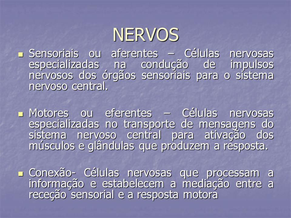NERVOS Sensoriais ou aferentes – Células nervosas especializadas na condução de impulsos nervosos dos órgãos sensoriais para o sistema nervoso central