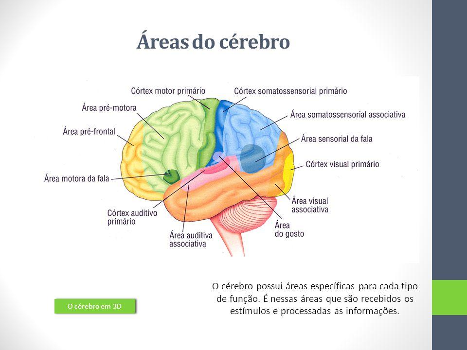 Actos Reflexos O centro nervoso envolvido é a espinal medula; Permite uma resposta mais rápida; Fundamental para a sobrevivência dos indivíduos.
