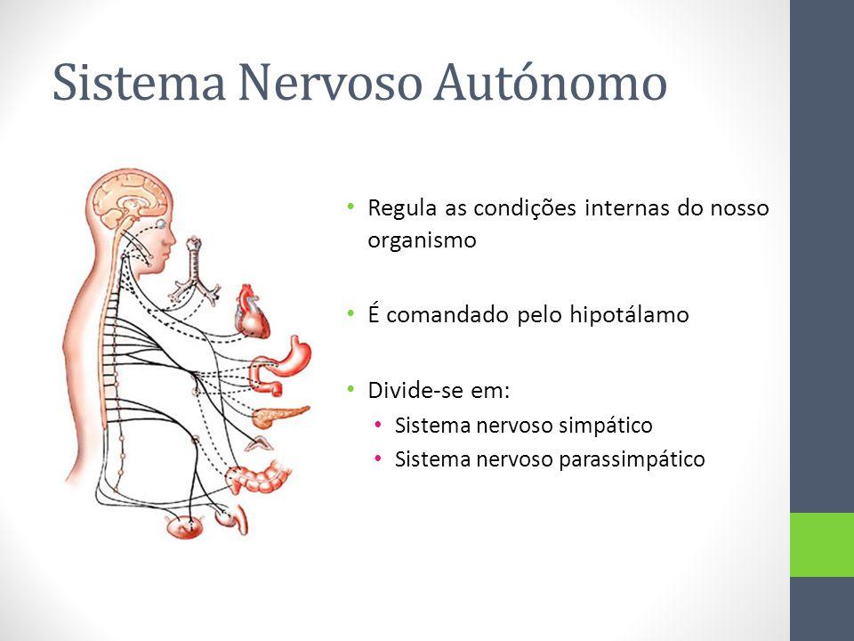 Sistema Nervoso Autónomo Regula as condições internas do nosso organismo É comandado pelo hipotálamo Divide-se em: Sistema nervoso simpático Sistema n