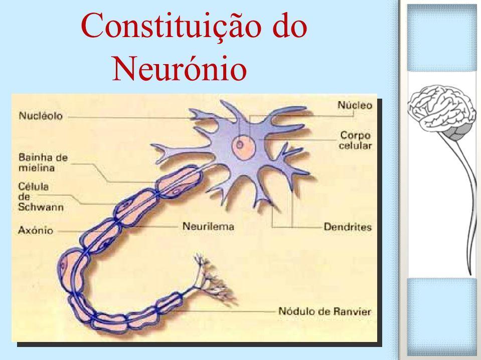 Constituição do Neurónio