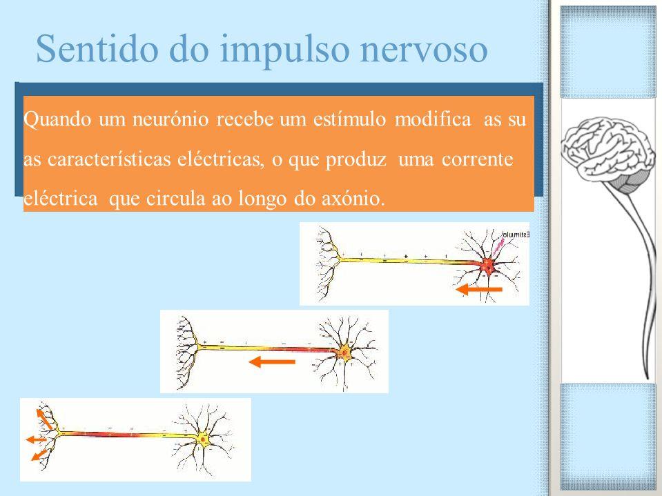 Quando um neurónio recebe um estímulo modifica as su as características eléctricas, o que produz uma corrente eléctrica que circula ao longo do axónio.