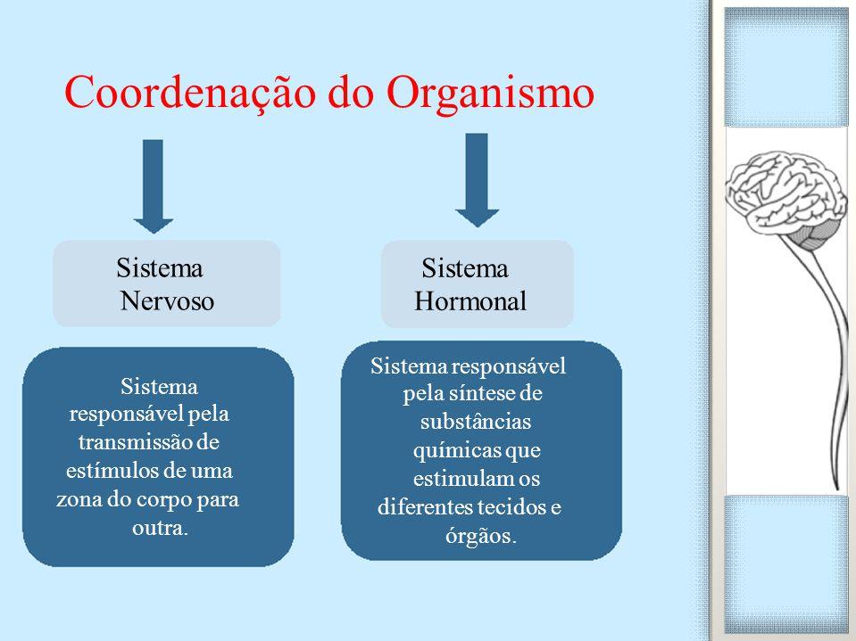 Coordenação do Organismo Sistema Hormonal Sistema responsável pela síntese de substâncias químicas que estimulam os diferentes tecidos e órgãos. Siste