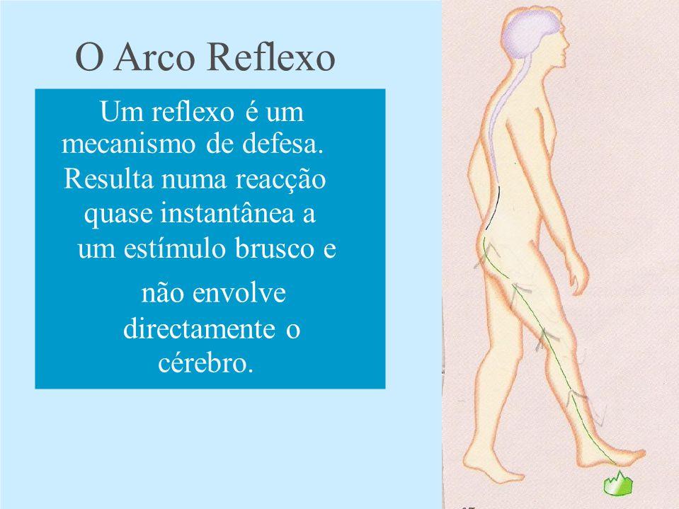 O Arco Reflexo Um reflexo é um mecanismo de defesa. Resulta numa reacção quase instantânea a um estímulo brusco e não envolve directamente o cérebro.