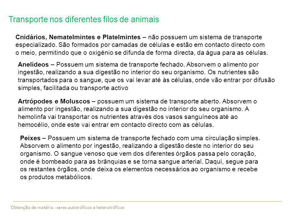 Transporte nos diferentes filos de animais Cnidários, Nematelmintes e Platelmintes – não possuem um sistema de transporte especializado. São formados