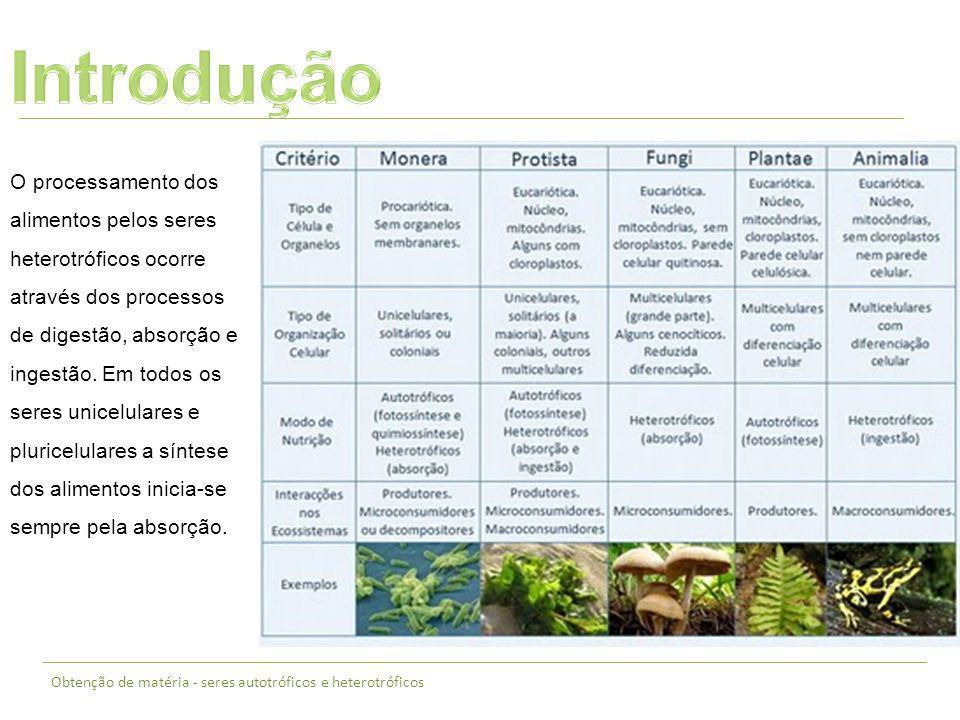 Obtenção de matéria - seres autotróficos e heterotróficos O processamento dos alimentos pelos seres heterotróficos ocorre através dos processos de dig