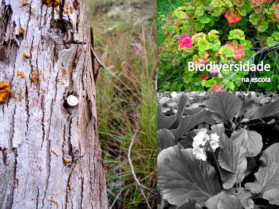 Introduçãoslide 3 Introduçãoslide 3 Organização Biológicaslide 4 Organização Biológicaslide 4 Seres vivos encontradosslide 5 Seres vivos encontradosslide 5 Relações entre os seres vivosslide 6 Relações entre os seres vivosslide 6 Seres unicelulares e multicelularesslide 7 Seres unicelulares e multicelularesslide 7 Aspectos da comunidade encontradaslide 8 Aspectos da comunidade encontradaslide 8 Influência do homen na Biosferaslide 9 Influência do homen na Biosferaslide 9 Conclusãoslide 10 Conclusãoslide 10