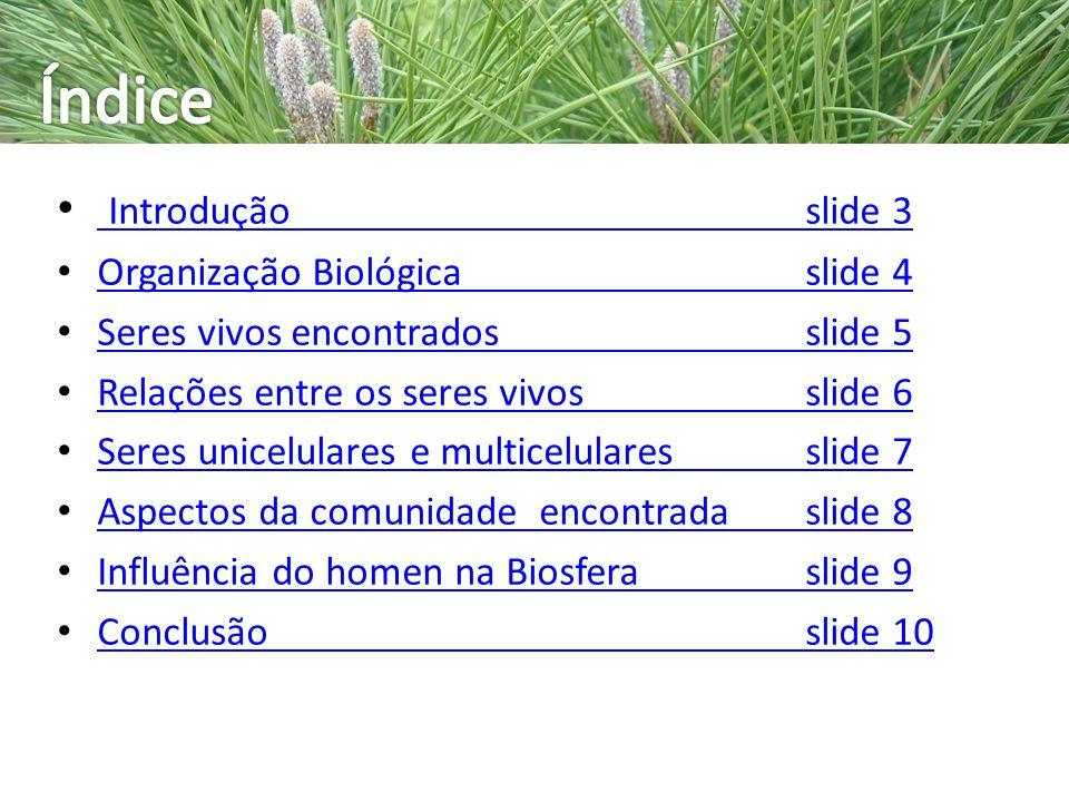 Introduçãoslide 3 Introduçãoslide 3 Organização Biológicaslide 4 Organização Biológicaslide 4 Seres vivos encontradosslide 5 Seres vivos encontradossl