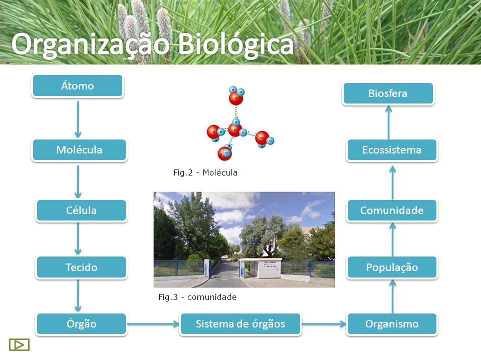 Átomo Molécula Órgão Célula Tecido Sistema de órgãos Organismo População Comunidade Ecossistema Biosfera Fig.2 - Molécula Fig.3 - comunidade