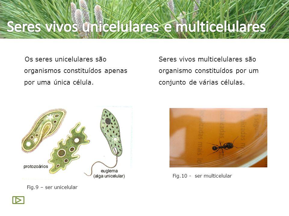 Os seres unicelulares são organismos constituídos apenas por uma única célula. Seres vivos multicelulares são organismo constituídos por um conjunto d