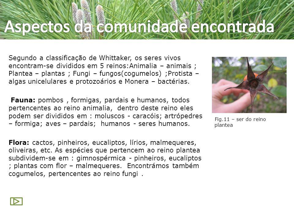 Segundo a classificação de Whittaker, os seres vivos encontram-se divididos em 5 reinos:Animalia – animais ; Plantea – plantas ; Fungi – fungos(cogume