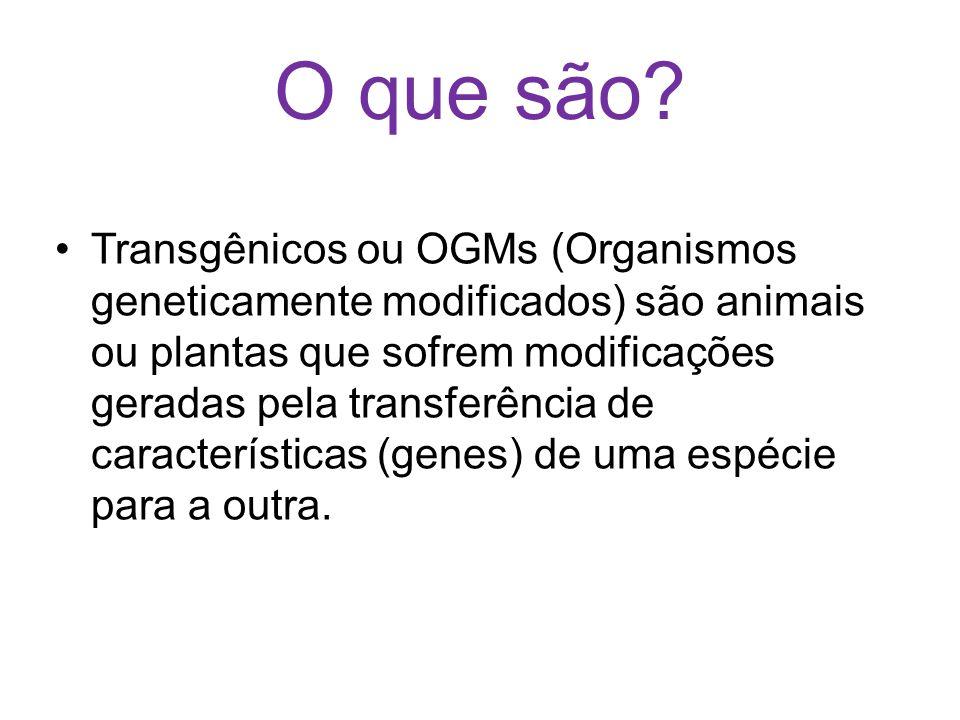 O que são? Transgênicos ou OGMs (Organismos geneticamente modificados) são animais ou plantas que sofrem modificações geradas pela transferência de ca