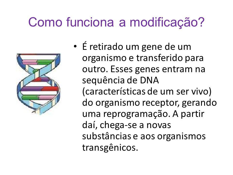 Como funciona a modificação? É retirado um gene de um organismo e transferido para outro. Esses genes entram na sequência de DNA (características de u
