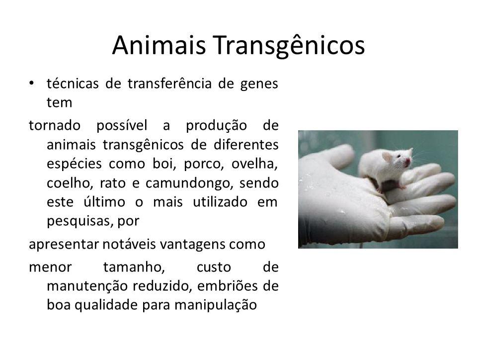 Animais Transgênicos técnicas de transferência de genes tem tornado possível a produção de animais transgênicos de diferentes espécies como boi, porco