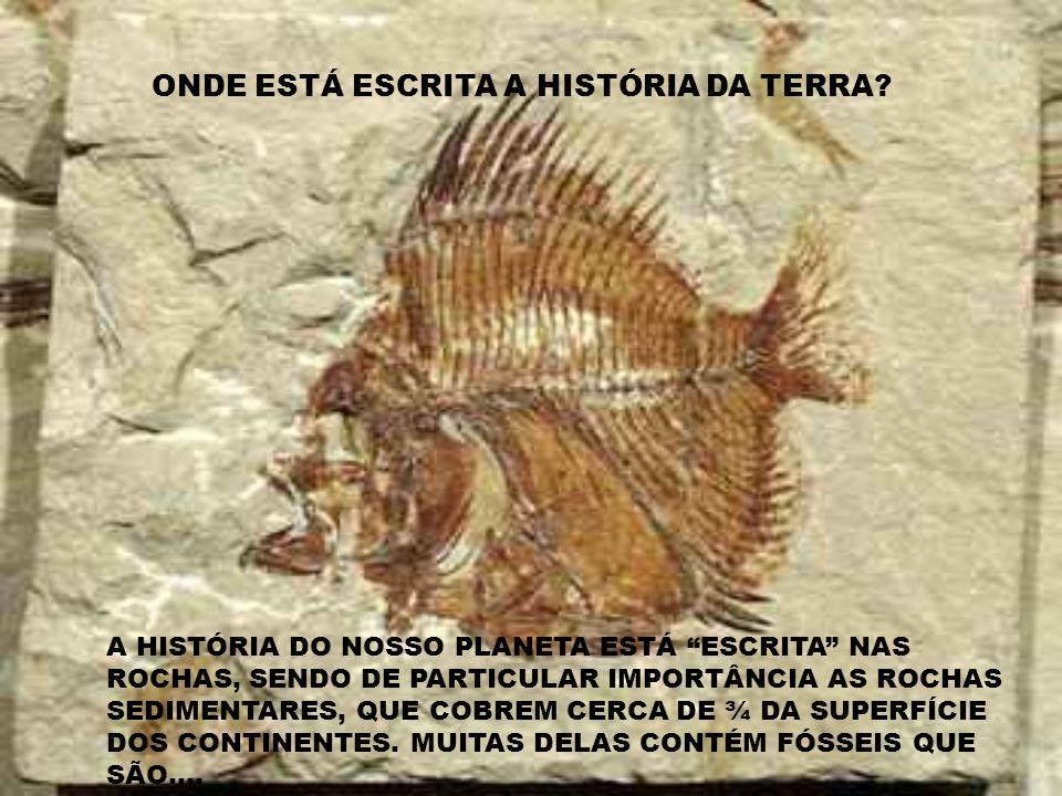 ONDE ESTÁ ESCRITA A HISTÓRIA DA TERRA.