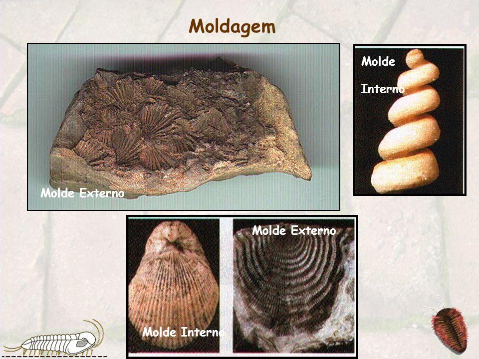 2 - Moldagem Não se conservam quaisquer partes do organismo, ficando apenas uma reprodução ou molde das suas partes duras.