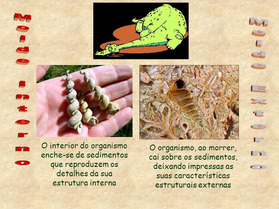 O interior do organismo enche-se de sedimentos que reproduzem os detalhes da sua estrutura interna O organismo, ao morrer, cai sobre os sedimentos, deixando impressas as suas características estruturais externas