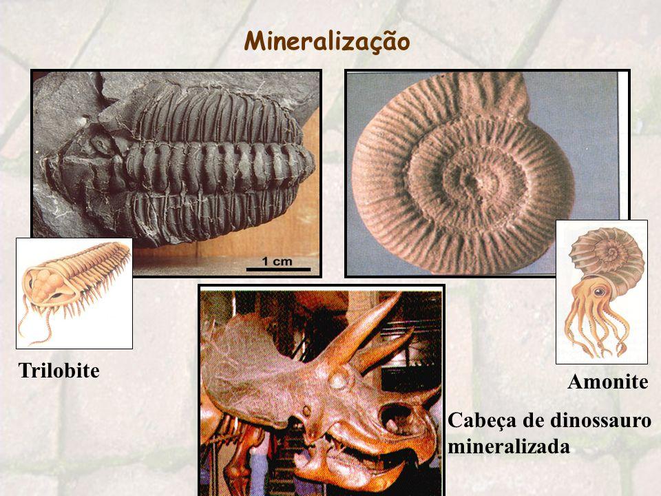 3 - Mineralização Os sedimentos que envolvem o ser vivo sofrem compressão devido ao peso dos depósitos que estão por cima.