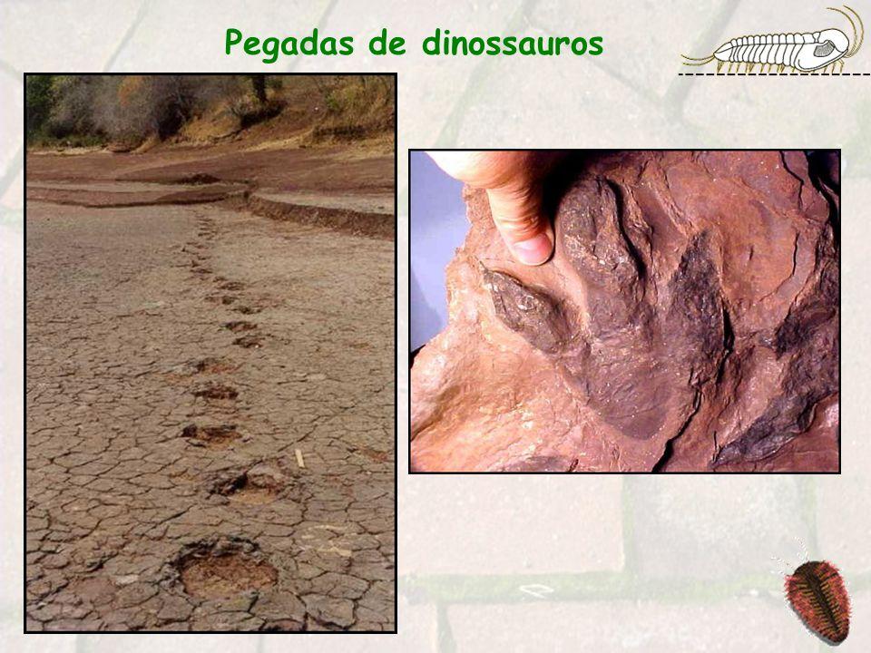 Constituem o tipo de fossilização mais abundante.