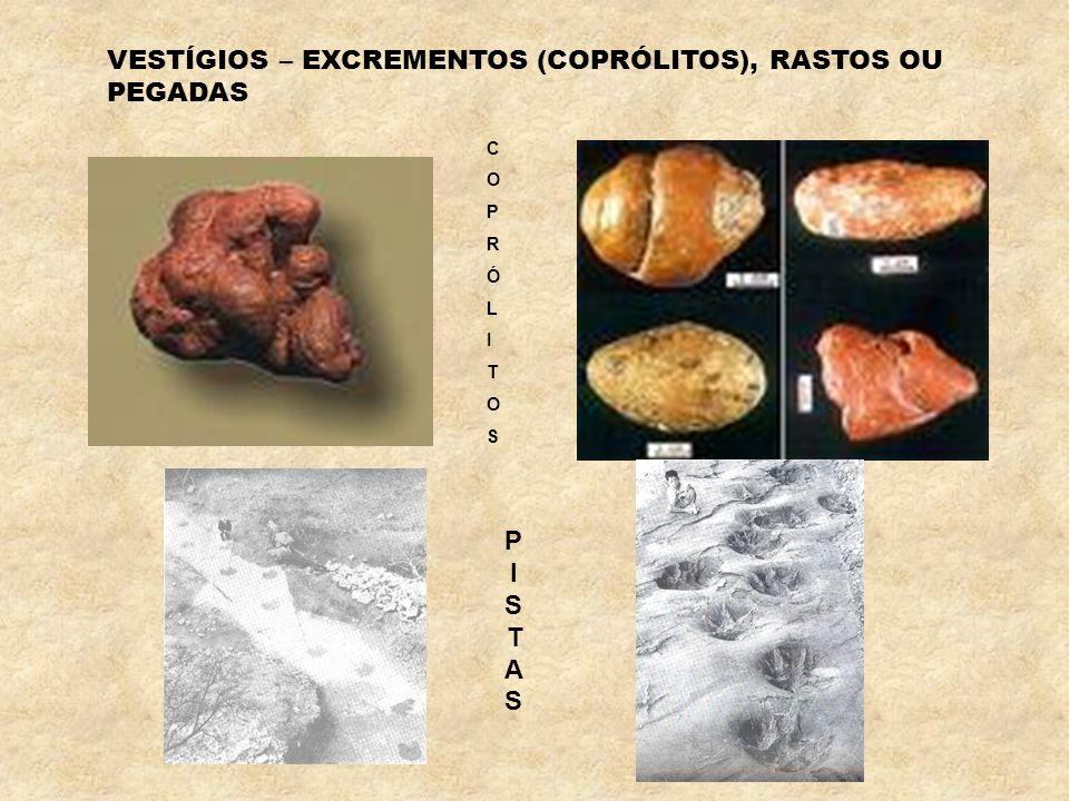 Gastrópode – 150 M.a. (milhões de anos) Trilobites – 500 M.a. voltar