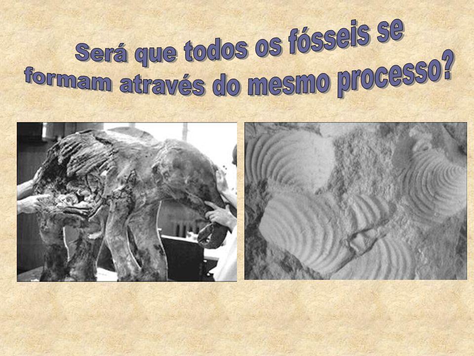 Existência de partes duras (ossos, dentes, carapaças) na constituição dos seres vivos – as partes moles são rapidamente decompostas; Habitat (a fossil