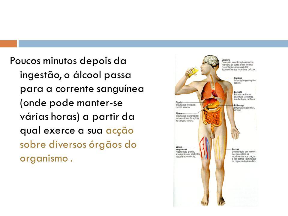 Poucos minutos depois da ingestão, o álcool passa para a corrente sanguínea (onde pode manter-se várias horas) a partir da qual exerce a sua acção sob