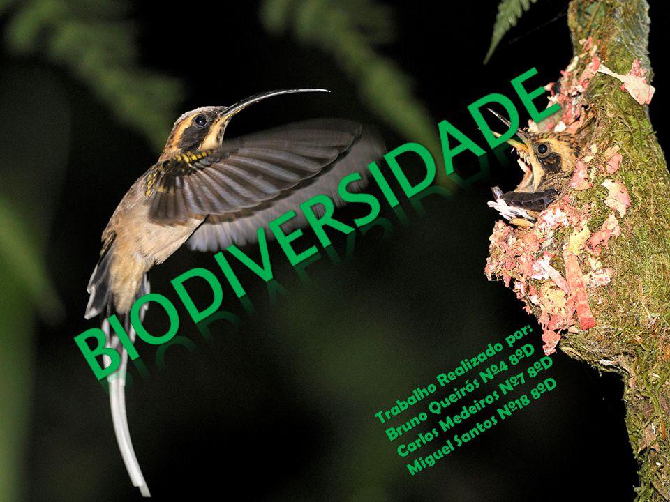 No âmbito da disciplina de Área de Projecto escolhemos um trabalho com o tema de Biodiversidade para dar a conhecer aos nossos colegas a informação sobre a biodiversidade e alertá- los para o perigo que o planeta está a sofrer.
