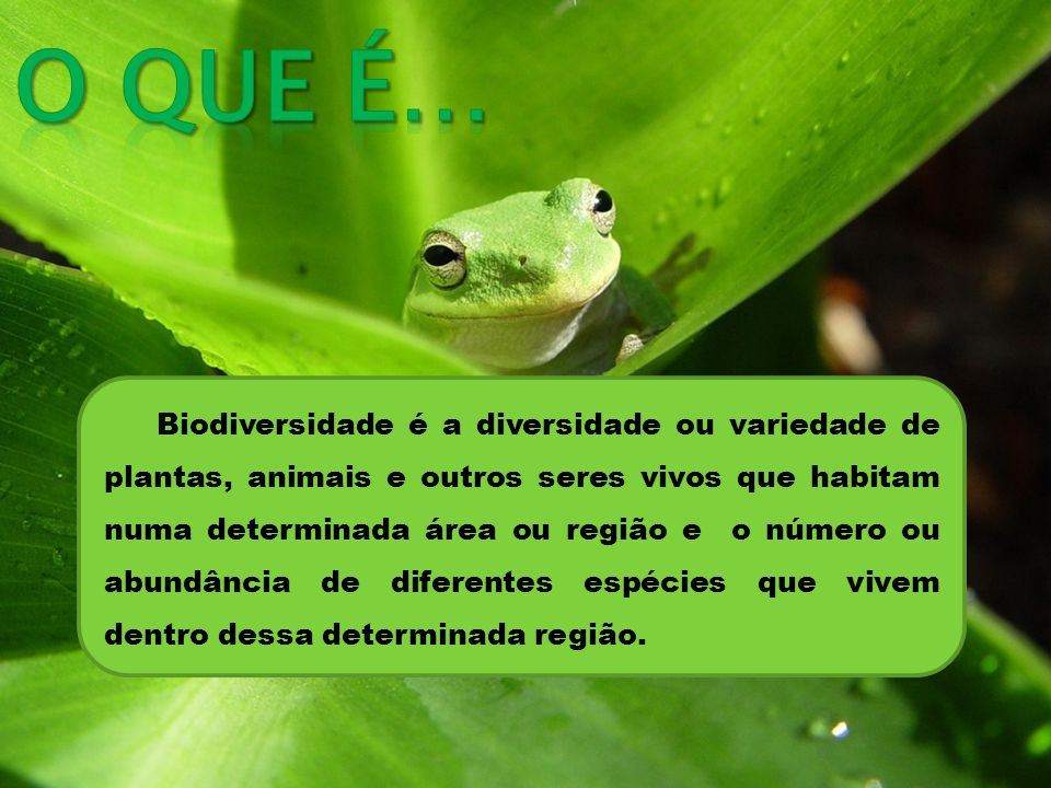 Biodiversidade é a diversidade ou variedade de plantas, animais e outros seres vivos que habitam numa determinada área ou região e o número ou abundância de diferentes espécies que vivem dentro dessa determinada região.