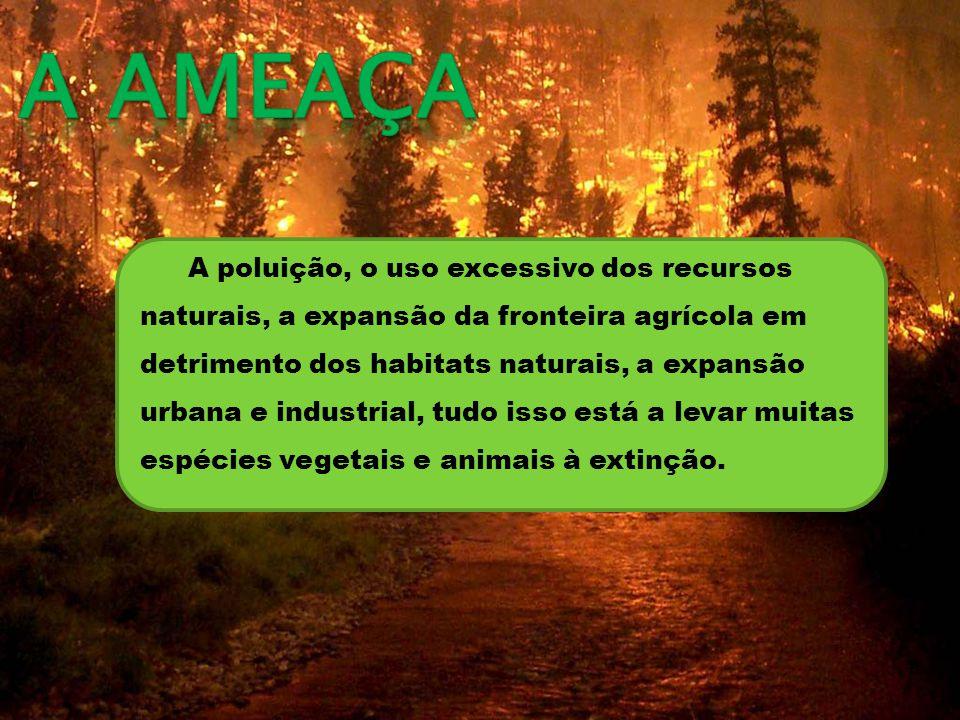 A poluição, o uso excessivo dos recursos naturais, a expansão da fronteira agrícola em detrimento dos habitats naturais, a expansão urbana e industrial, tudo isso está a levar muitas espécies vegetais e animais à extinção.