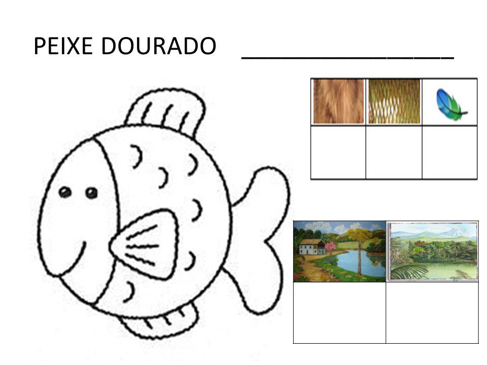 PEIXE DOURADO ________________