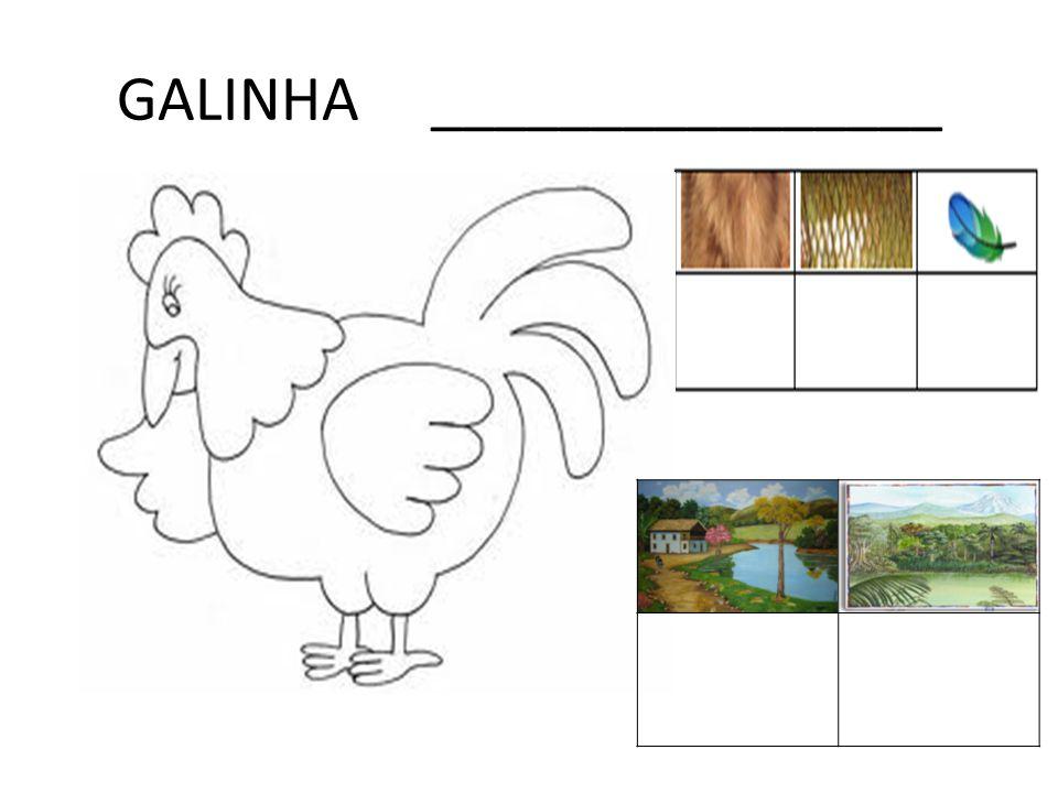 GALINHA ________________