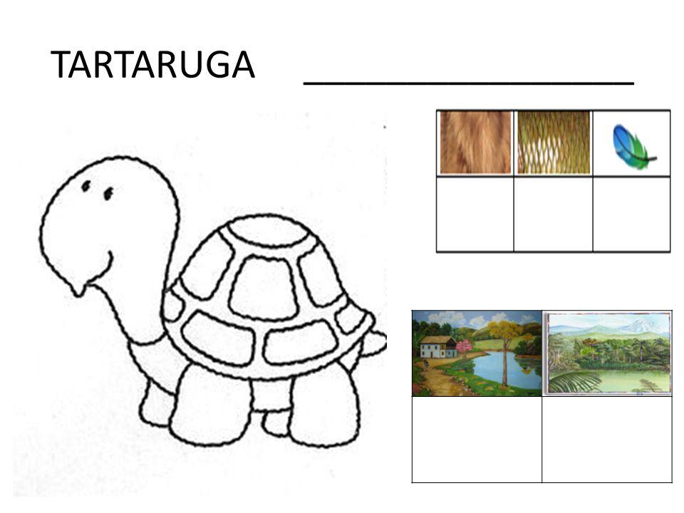 TARTARUGA ________________