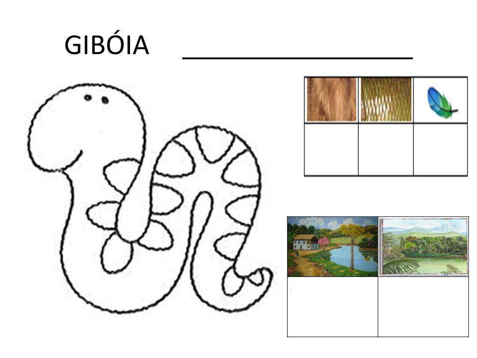 GIBÓIA ________________
