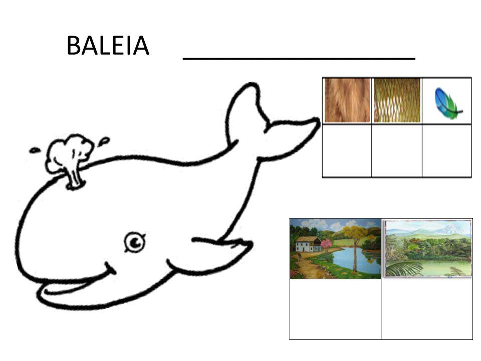BALEIA ________________