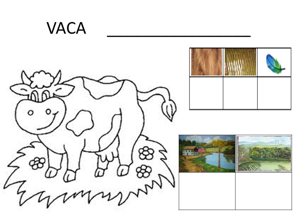VACA ________________