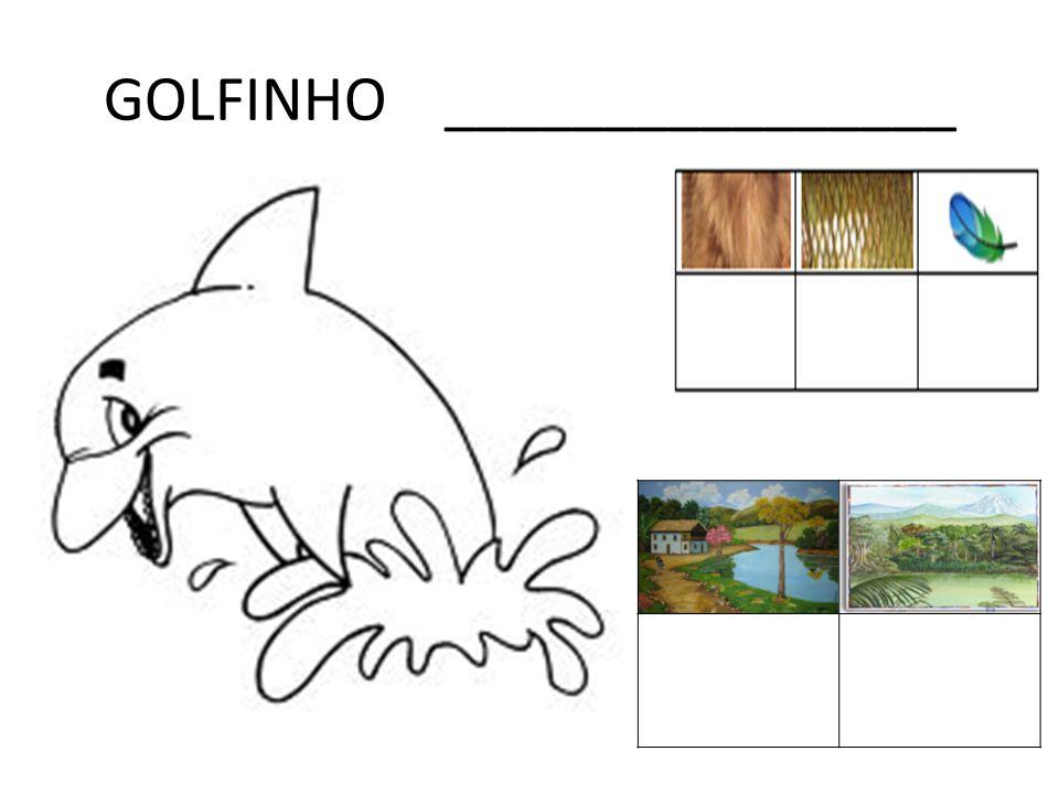GOLFINHO ________________