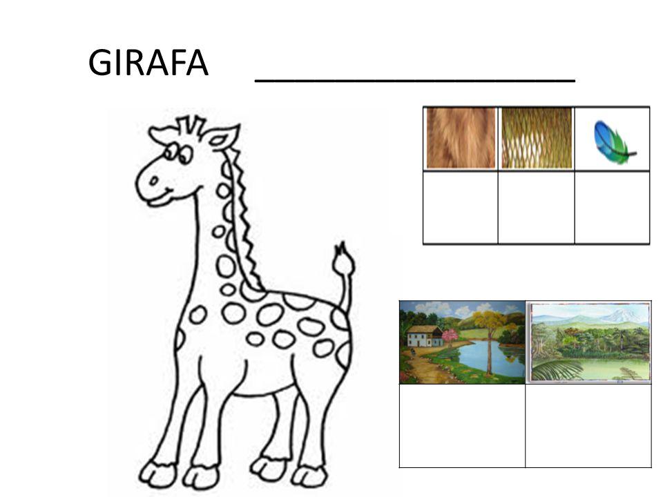 GIRAFA ________________