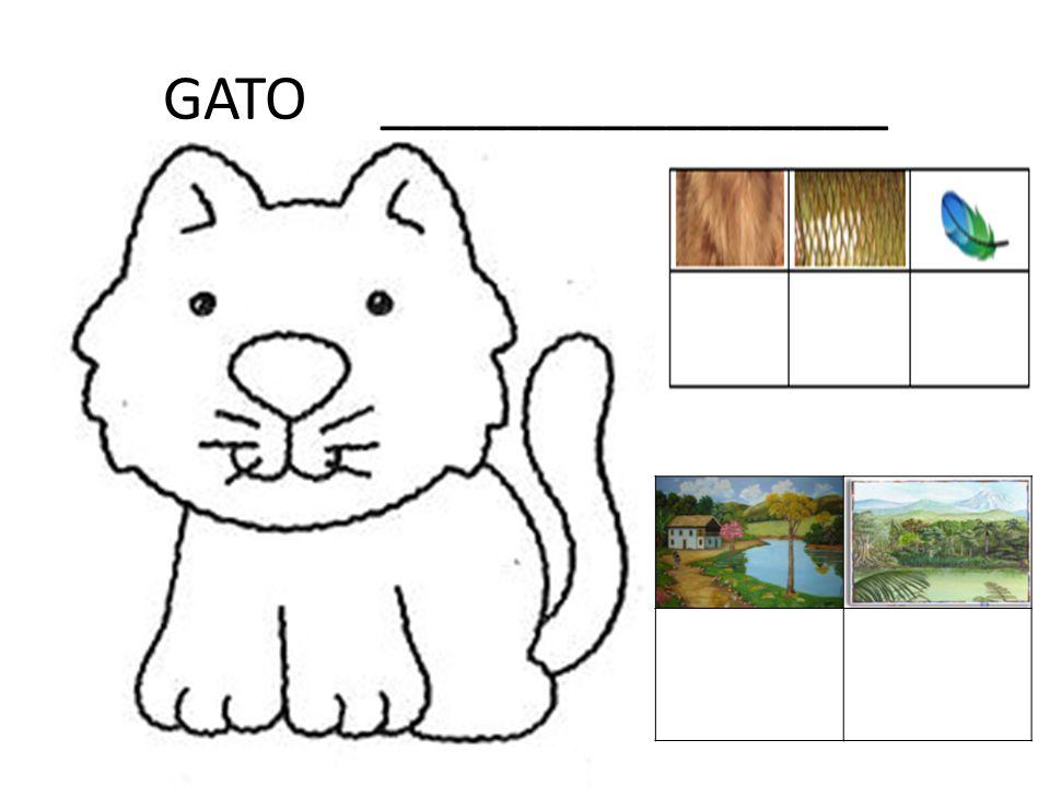 GATO ________________