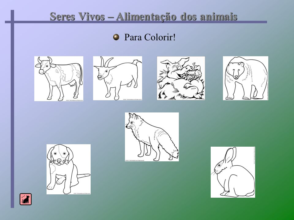 Seres Vivos – Alimentação dos animais Para Colorir!