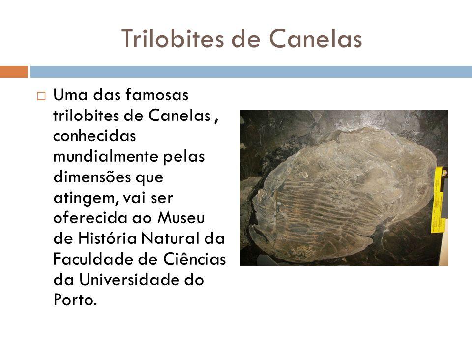Trilobites de Canelas  Uma das famosas trilobites de Canelas, conhecidas mundialmente pelas dimensões que atingem, vai ser oferecida ao Museu de Hist