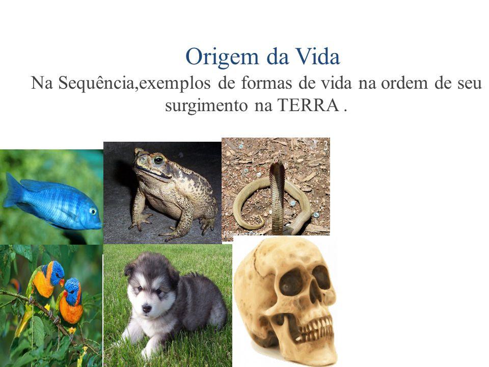 Origem da Vida Na Sequência,exemplos de formas de vida na ordem de seu surgimento na TERRA.