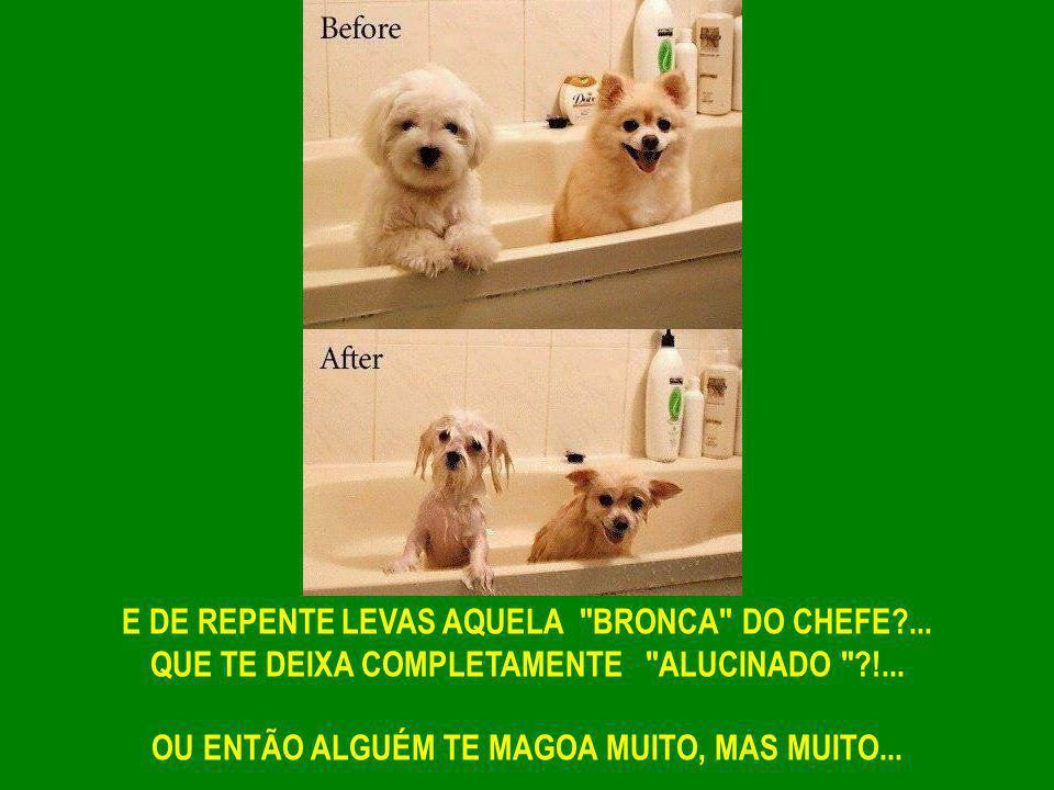 E DE REPENTE LEVAS AQUELA BRONCA DO CHEFE?...QUE TE DEIXA COMPLETAMENTE ALUCINADO ?!...